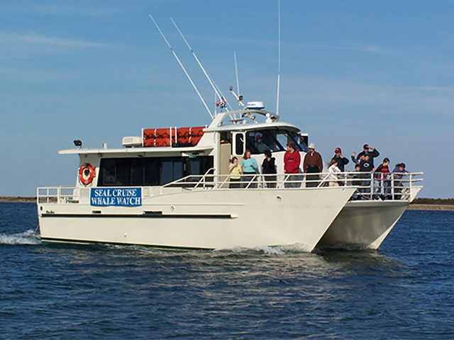 Cape Cod Whale Watches, Cape Cod Whale Watching Cruises, Cape Cod Whale Watching, Cape Cod Cruises, Cape Cod Party Cruises