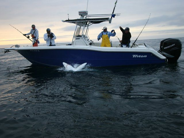 Cape Cod Vacation Rentals Cape Cod Vacations-17